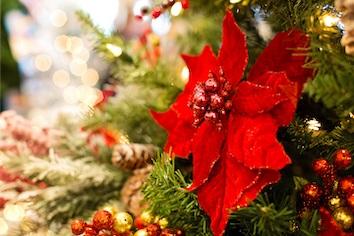Weihnachtsfotografie – Tipps von unserer Fotografin Marisa Migliazzi